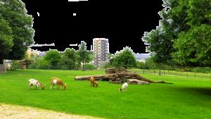 Höhenpark Killesberg Stuttgart Ziegen